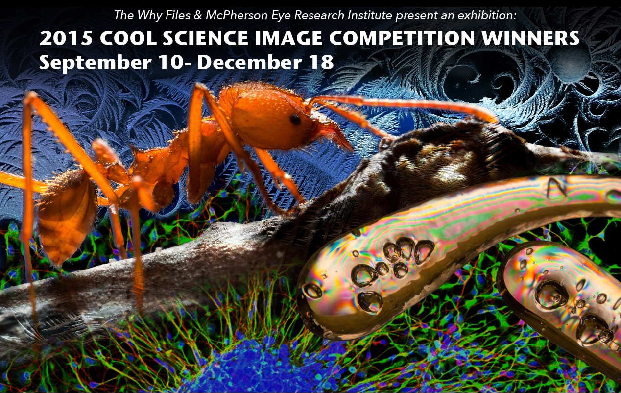 Cool Science Image Competition