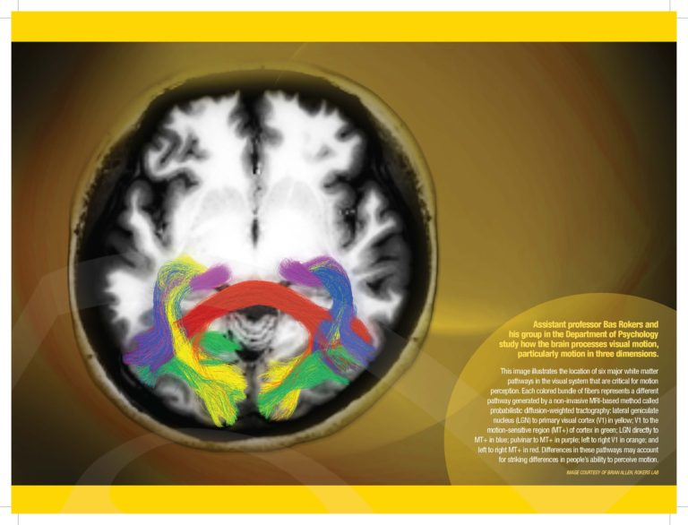 Bas Rokers July 2014 Lab Picture Brain